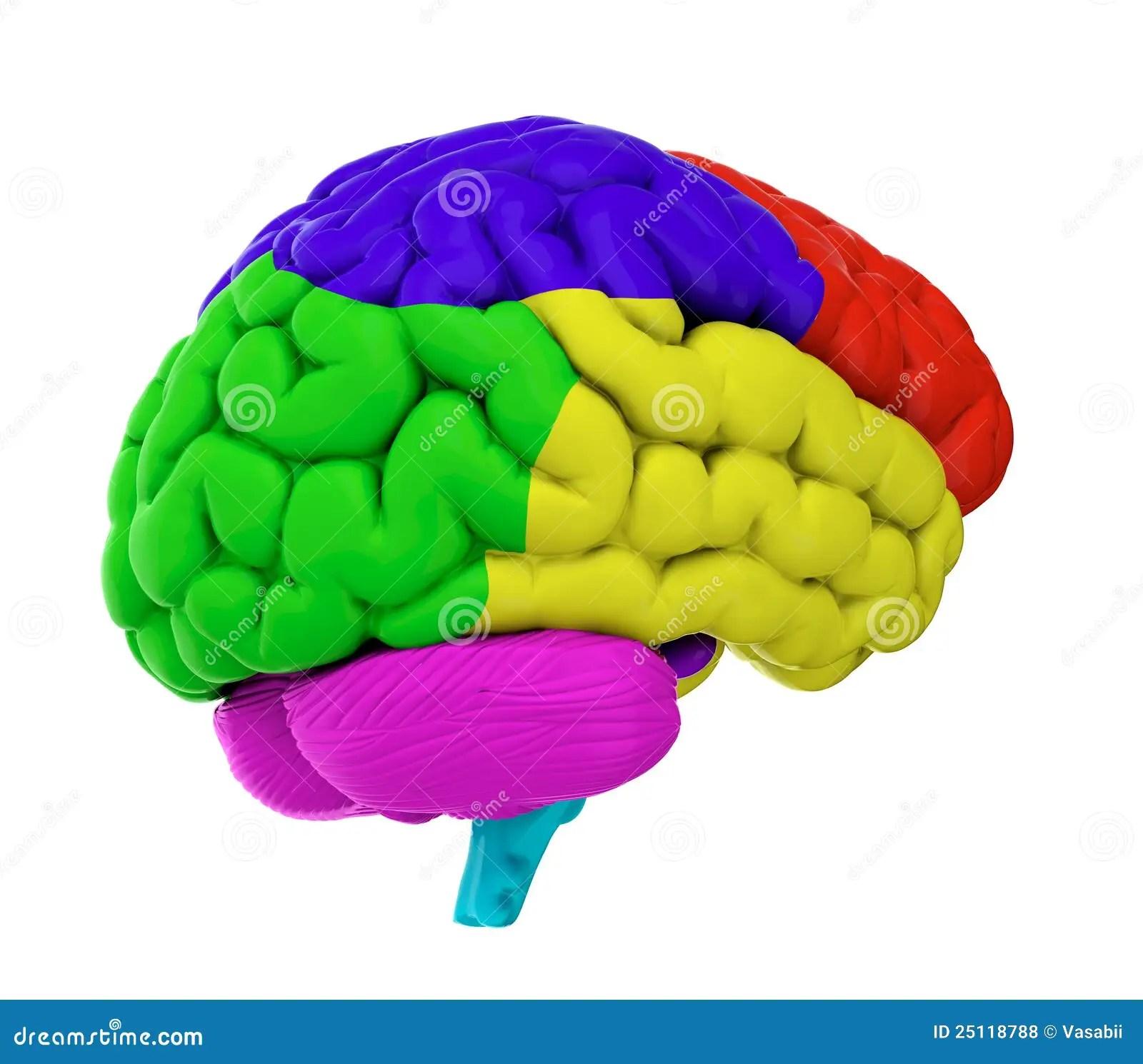 Colored Brain Stock Illustration Illustration Of Color