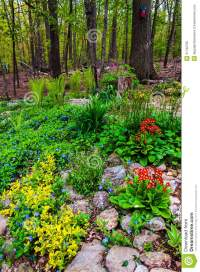 A Colorful Backyard Woodland Garden In York County, PA ...