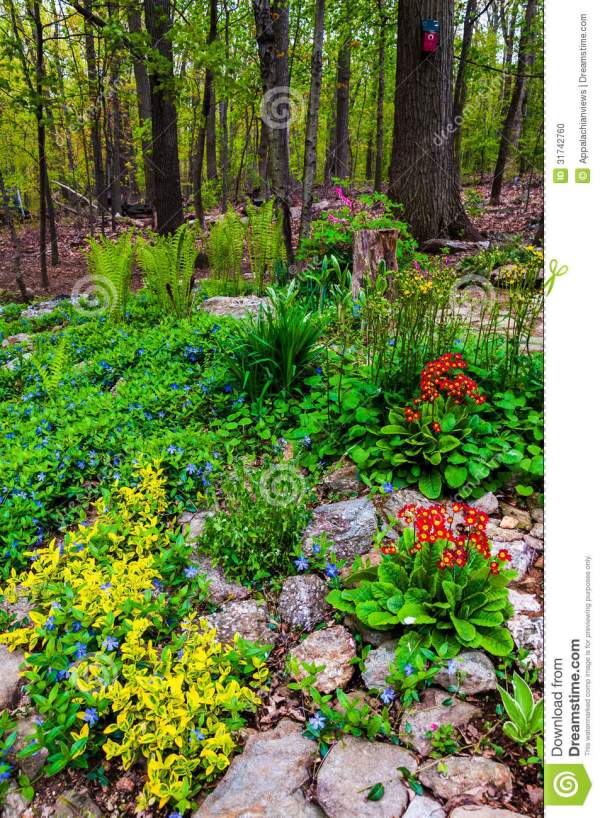 colorful backyard woodland garden