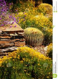 Colorful desert garden stock image. Image of brick ...