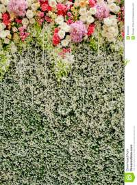 Colorful Flowers With Green Wall For Wedding Backdrop ...