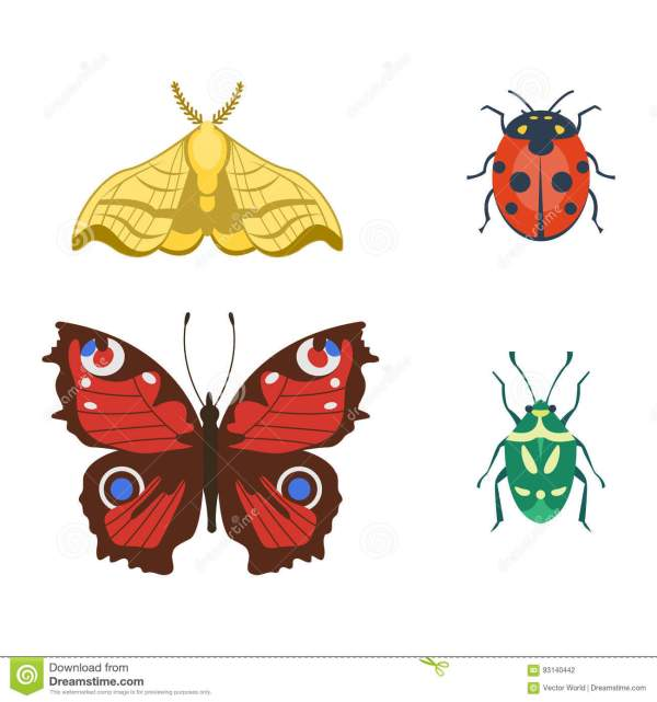 Colorful Insects Icons Isolated Wildlife Wing Detail