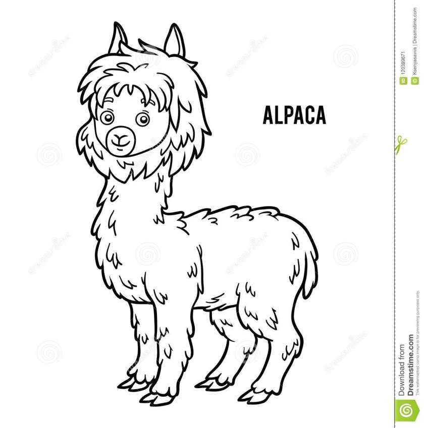 coloring book alpaca stock vector. illustration of page