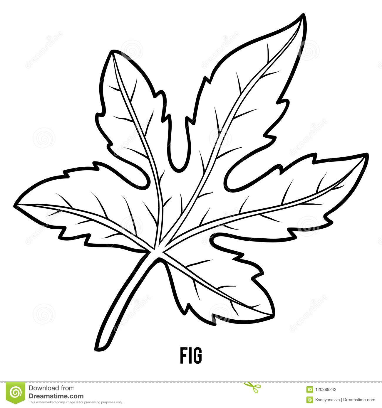 Coloring Book For Children, Fig Tree Stock Vector