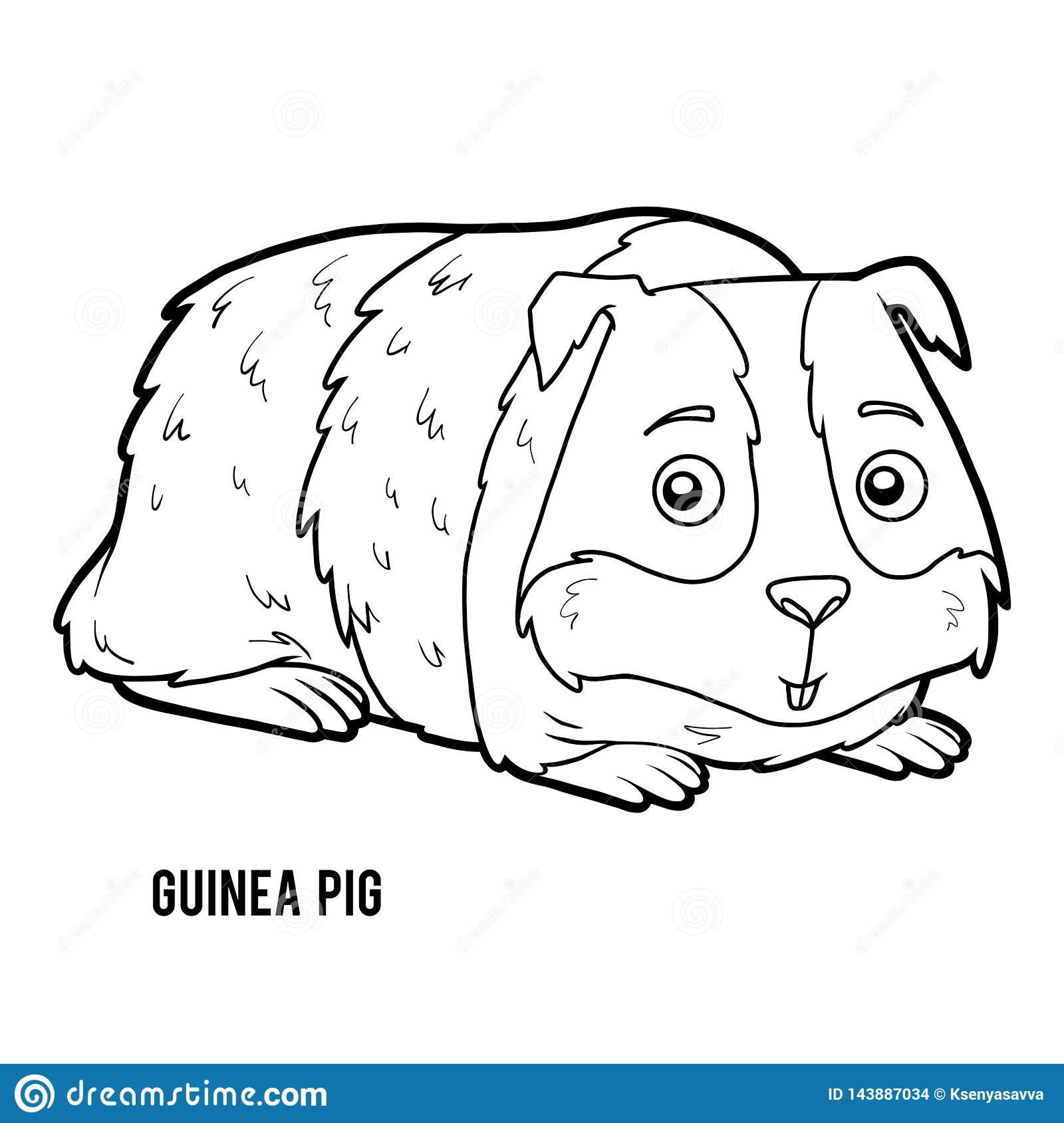 Coloring Book Guinea Pig Stock Vector Illustration Of