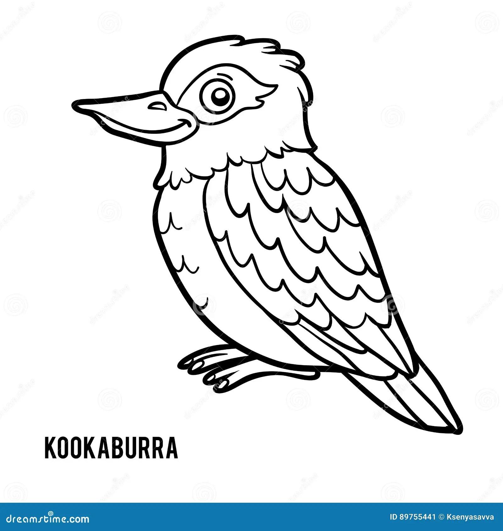 Coloring Book Kookaburra Stock Vector Illustration Of