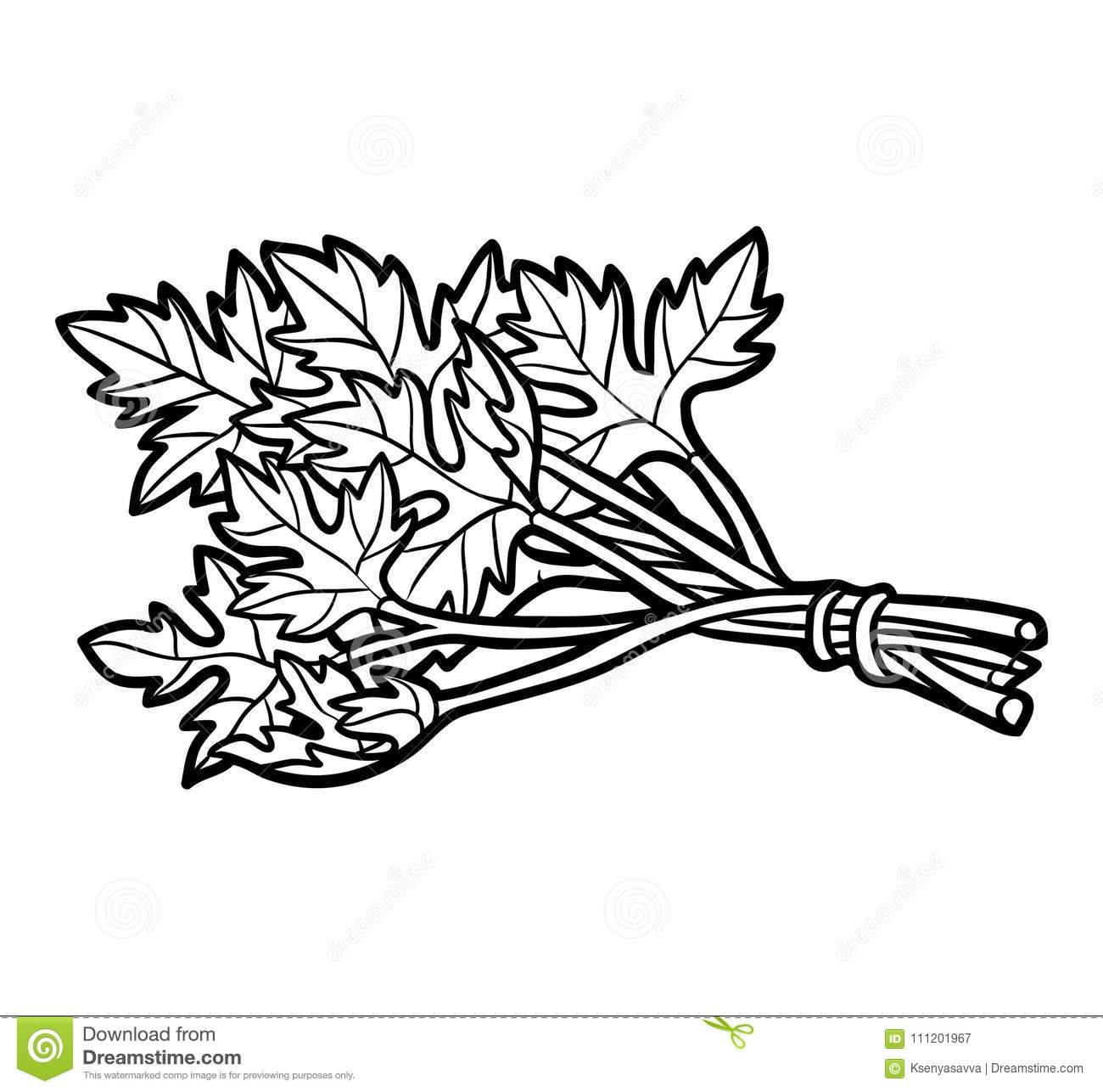 Coloring book, Parsley stock vector. Illustration of color