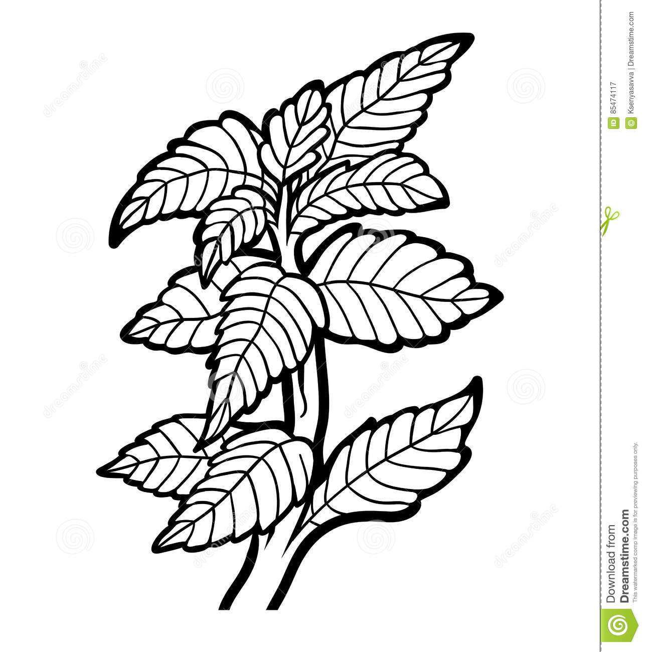 Coloring book, plant, Mint stock vector. Illustration of