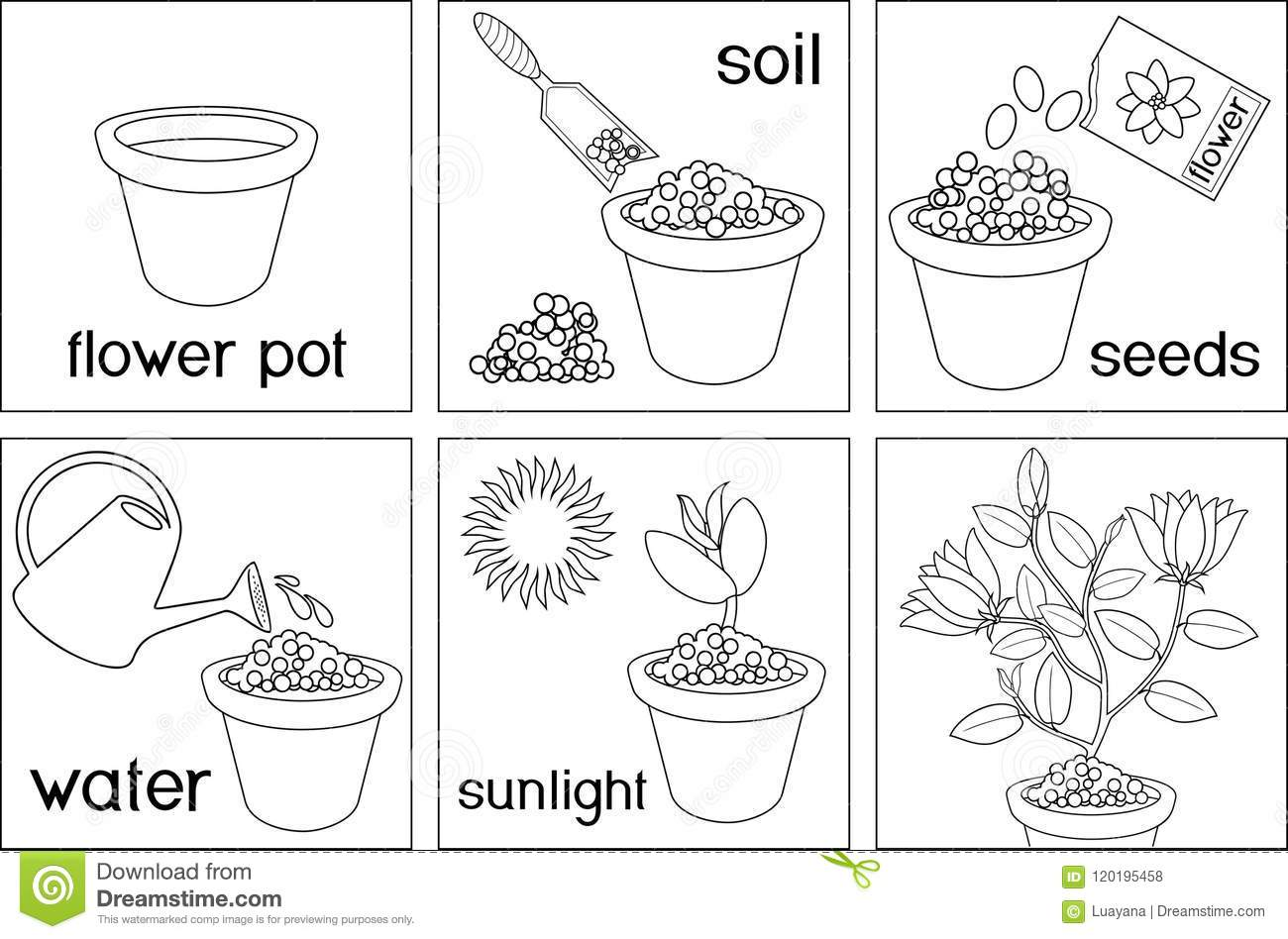 Cartoon Process Of Planting And Growing The Flower