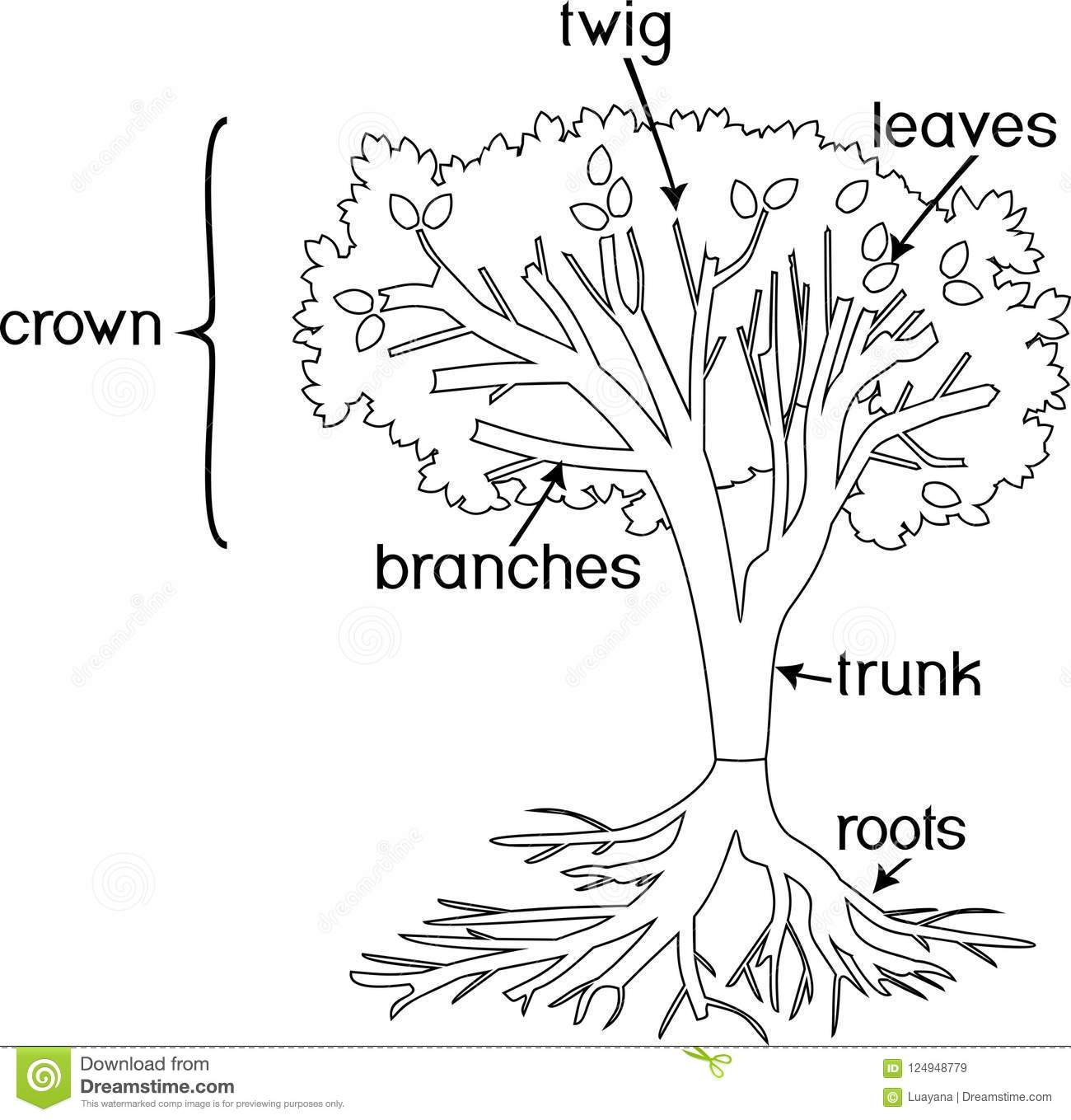 Parts Of A Tree Coloring Page