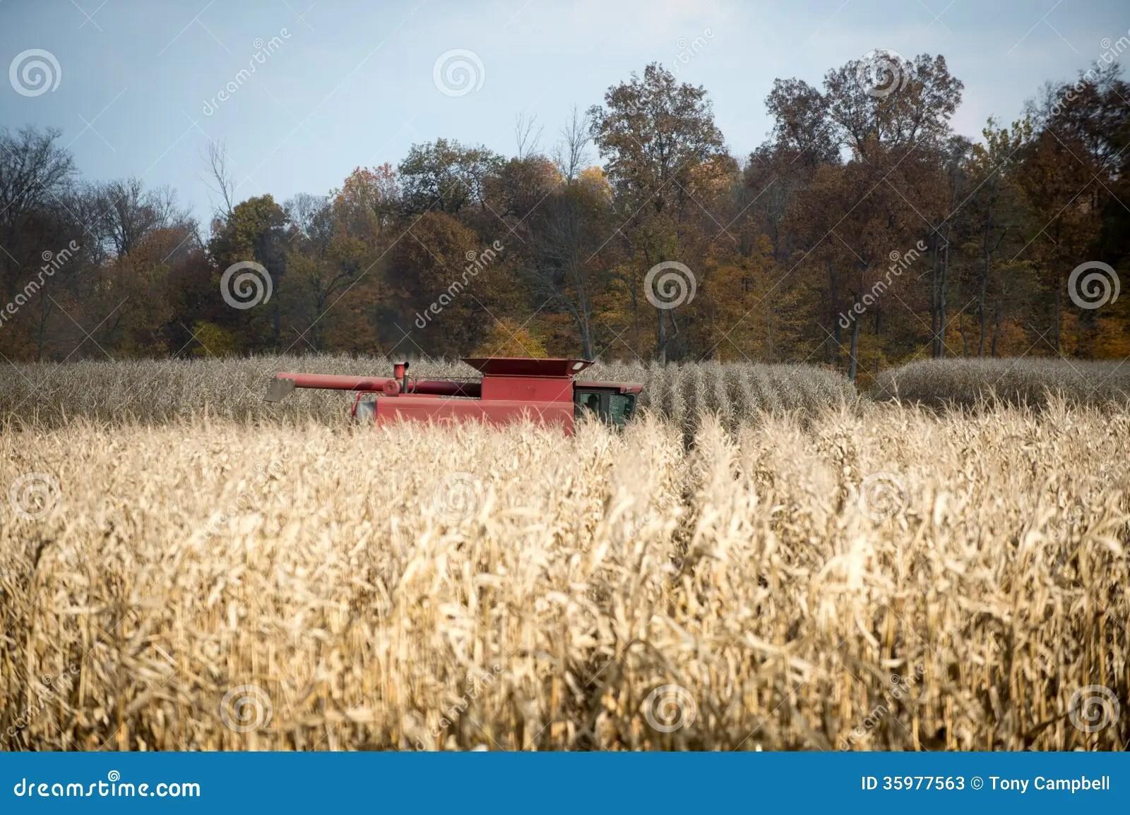 Corn Field And Corn In Wagon Cartoon Vector