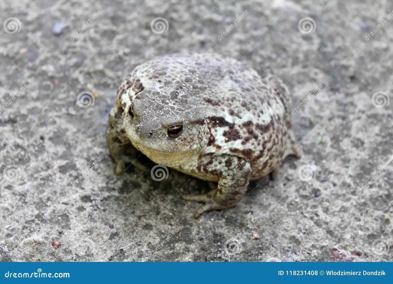 Camouflage Animals Stock Photos