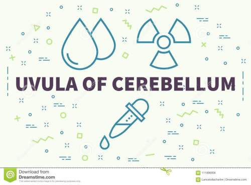 small resolution of conceptual illustration with the words uvula of cerebel