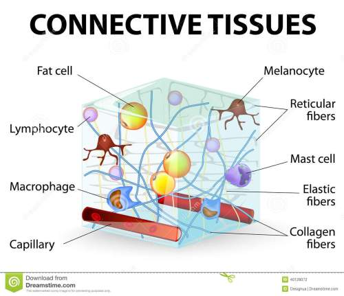 small resolution of connective tissue