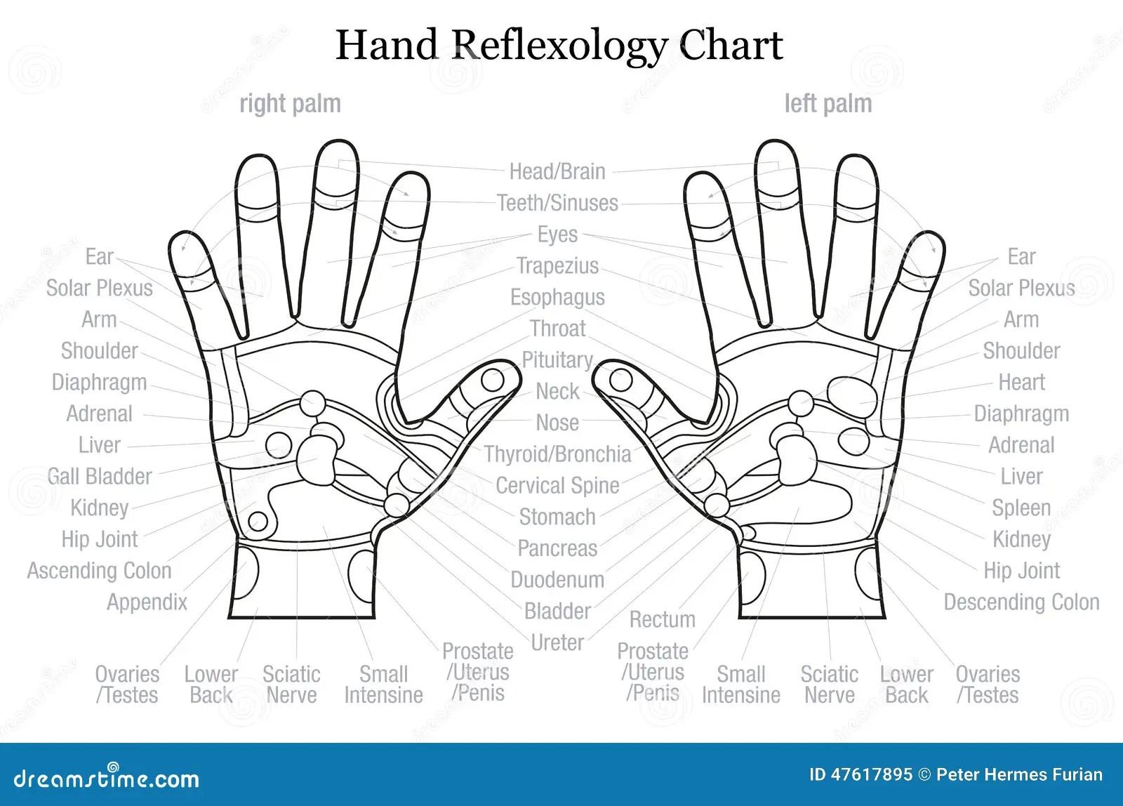Contour De Description De Diagramme De Reflexotherapie De