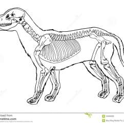 Dog Internal Anatomy Diagram 6 Lead Single Phase Motor Wiring Contour De Squelette Chien Illustration Stock