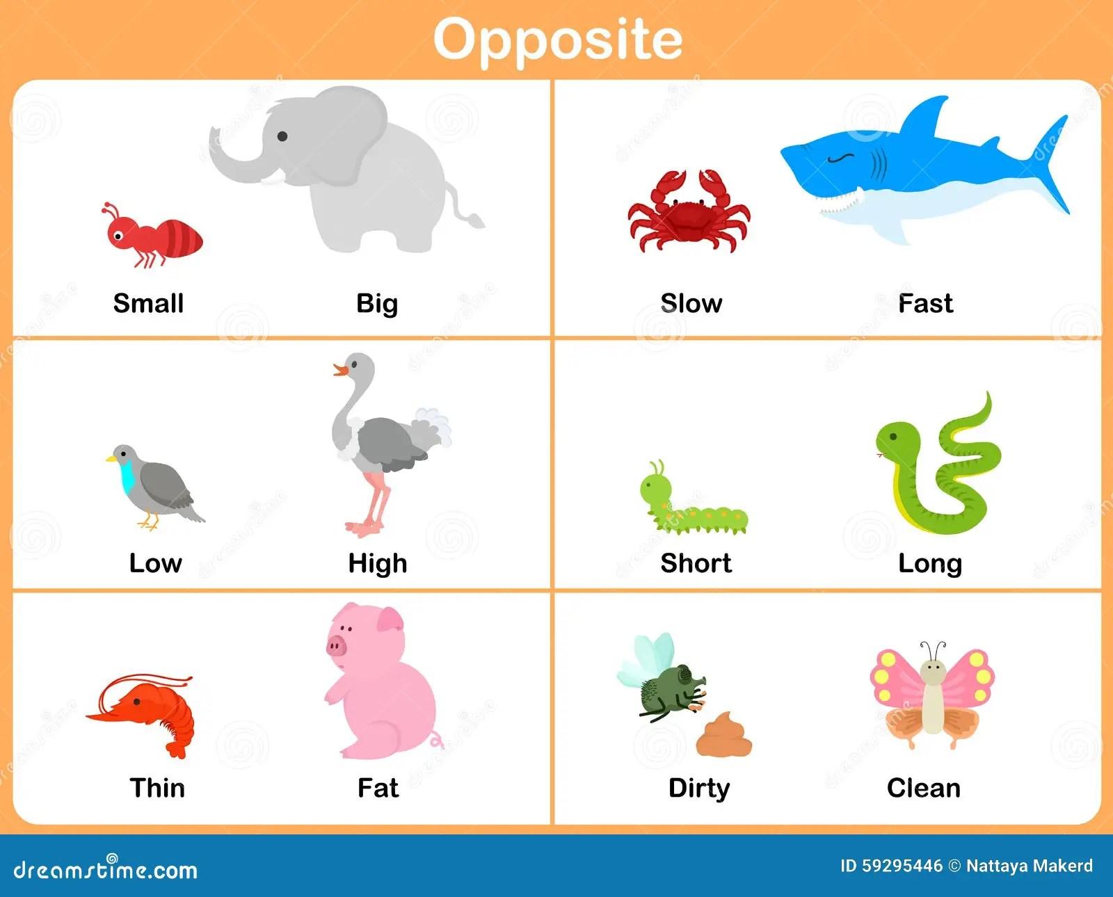 Contrario Con Los Animales Para El Preescolar