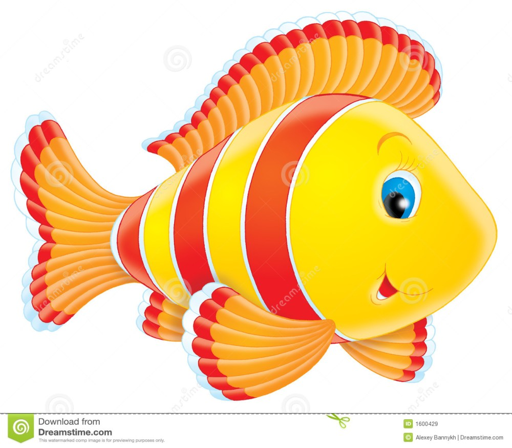 medium resolution of coral fish