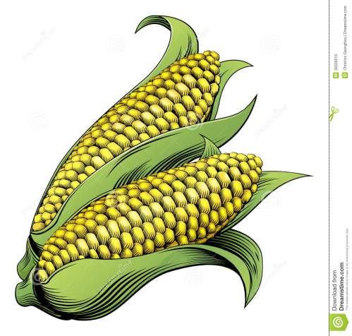 small resolution of corn woodcut stock illustrations 105 corn woodcut stock illustrations vectors clipart dreamstime