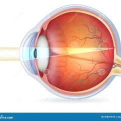 Human Eye Diagram Unlabeled Aprilia Rs 50 2008 Wiring Corte Transversal Del Ojo Humano Visión Normal Foto De