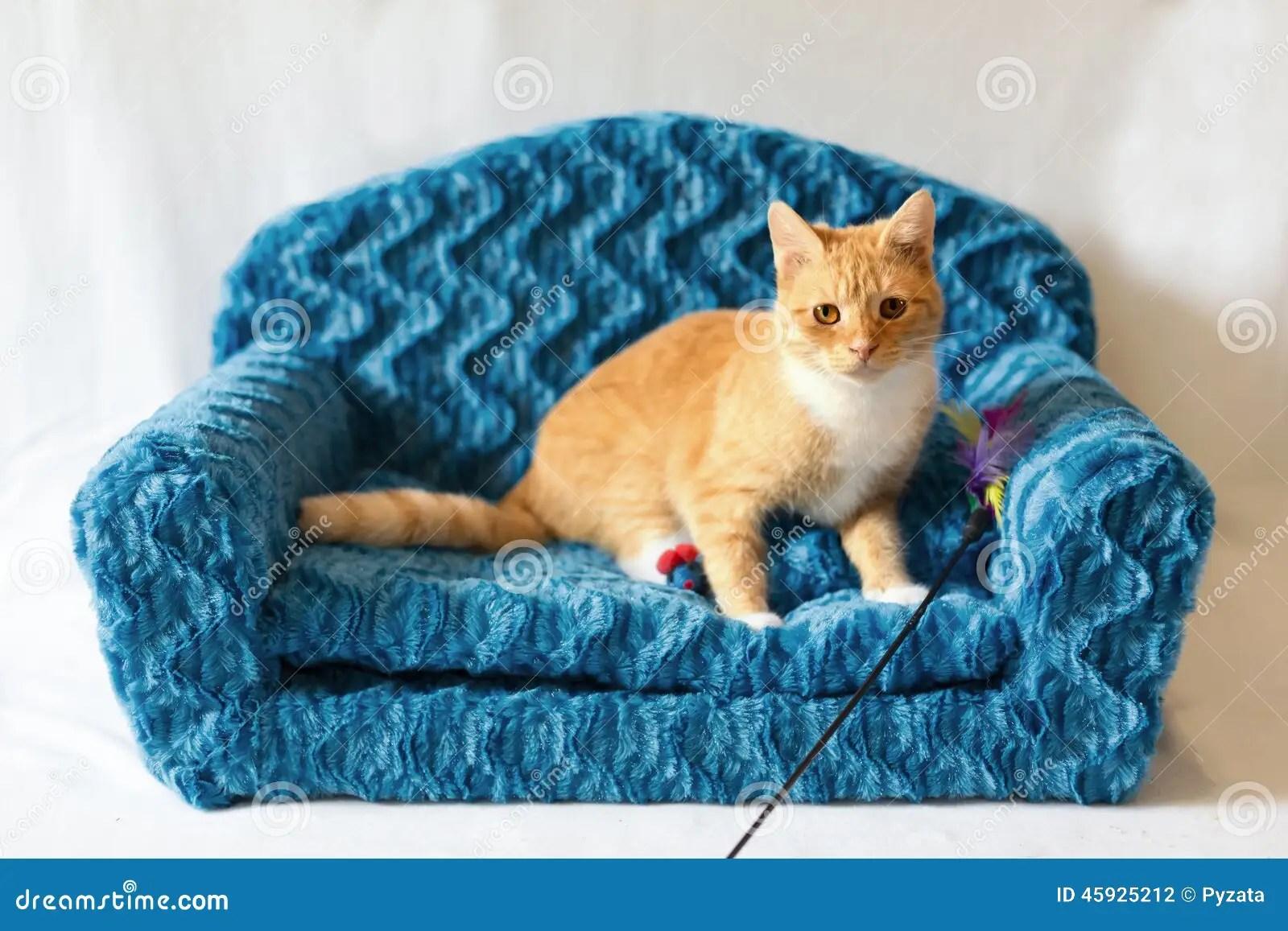 cat tunnel sofa price velvet tufted sleeper couch kitty stock photo image 45925212