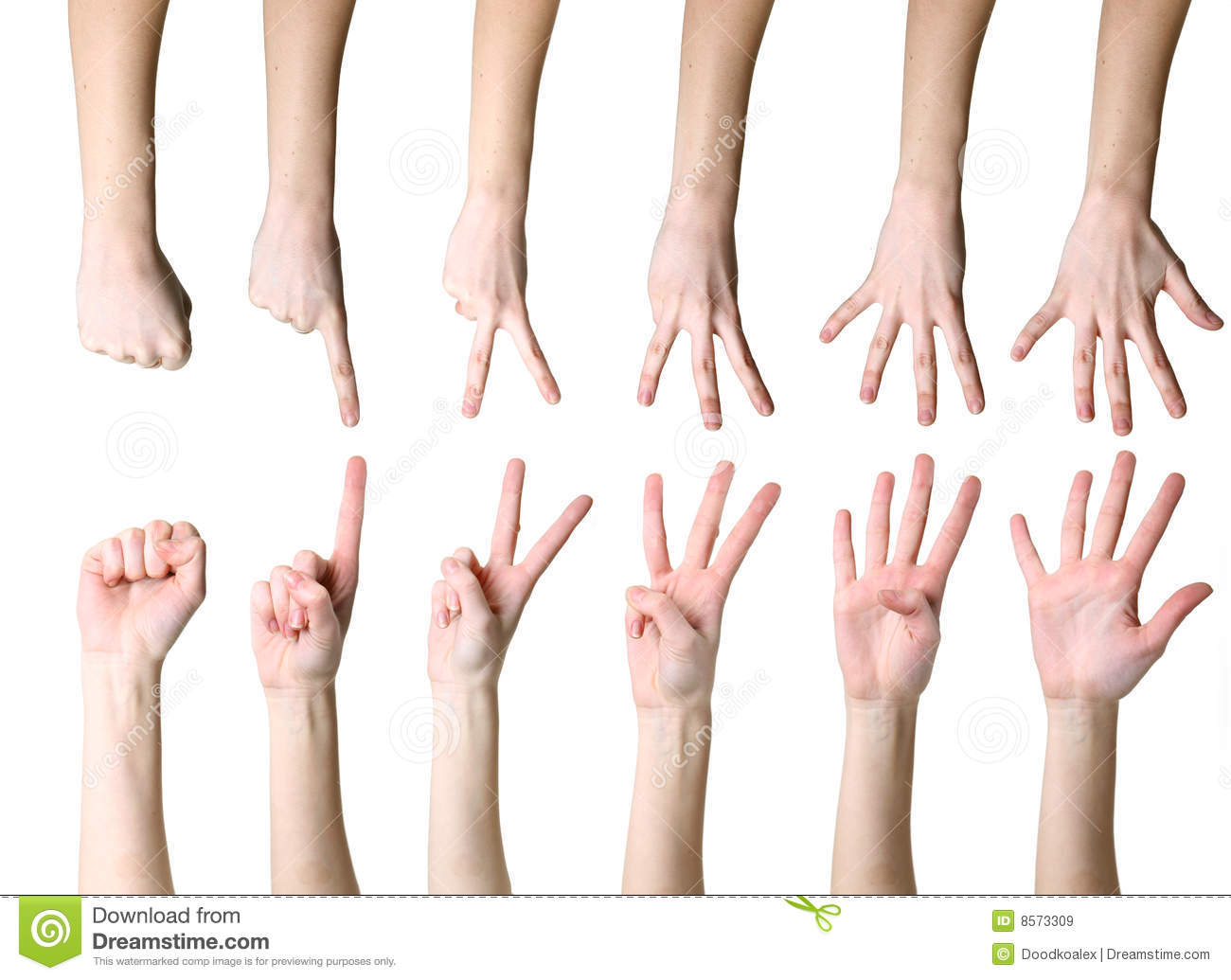 Counting Hands Stock Image Image Of Gesture Isolated
