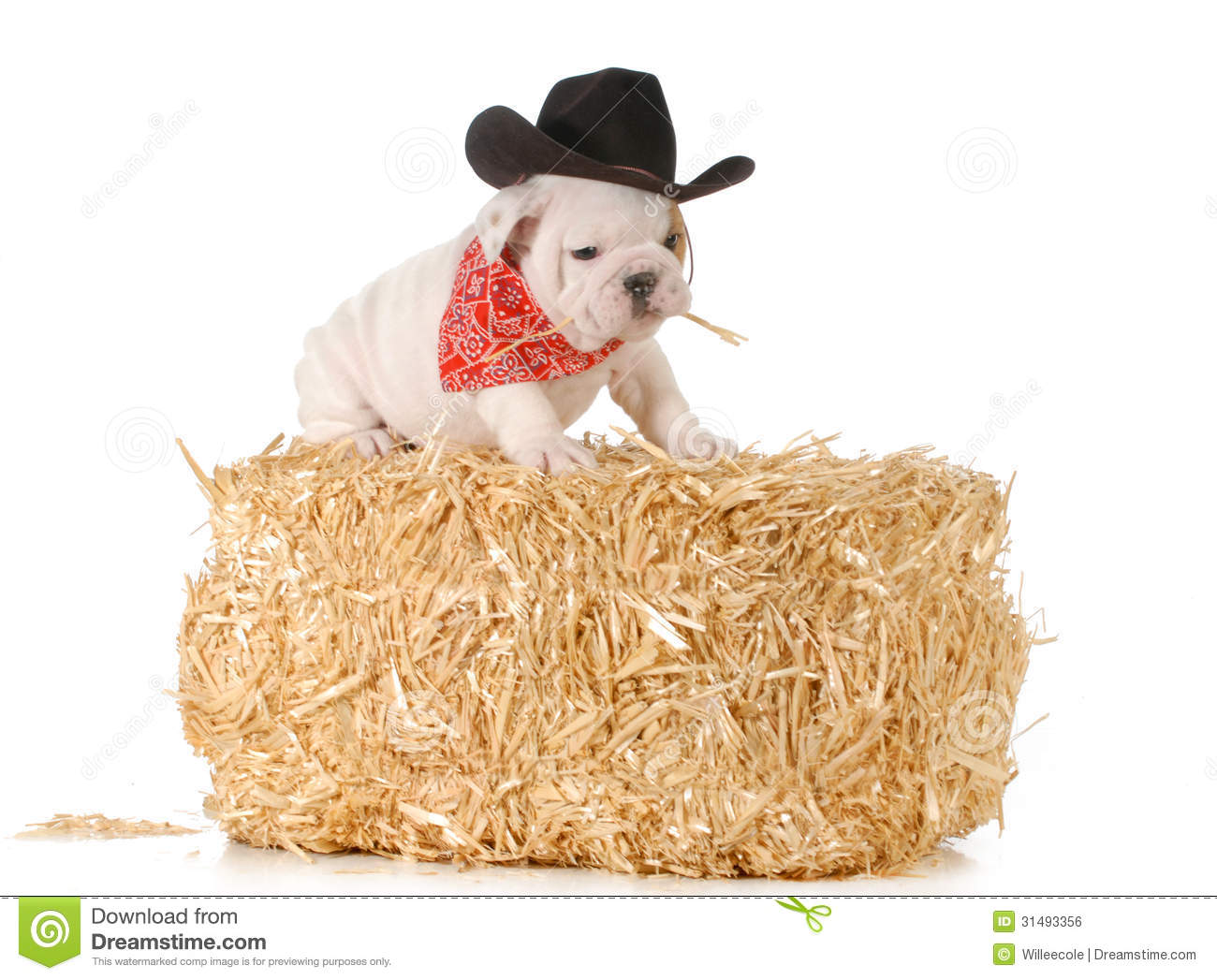 Country Dog Stock Photo Image Of Growth Cute Country