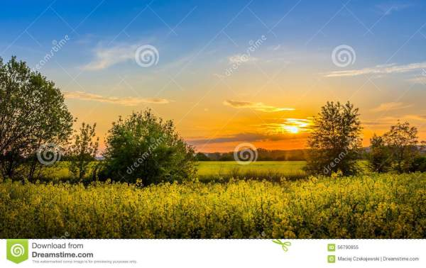 Country Sunset Landscape