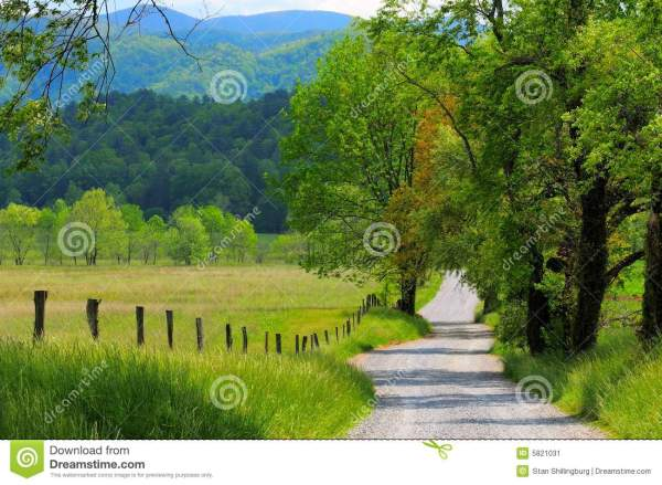 Country Dirt Road with Trees