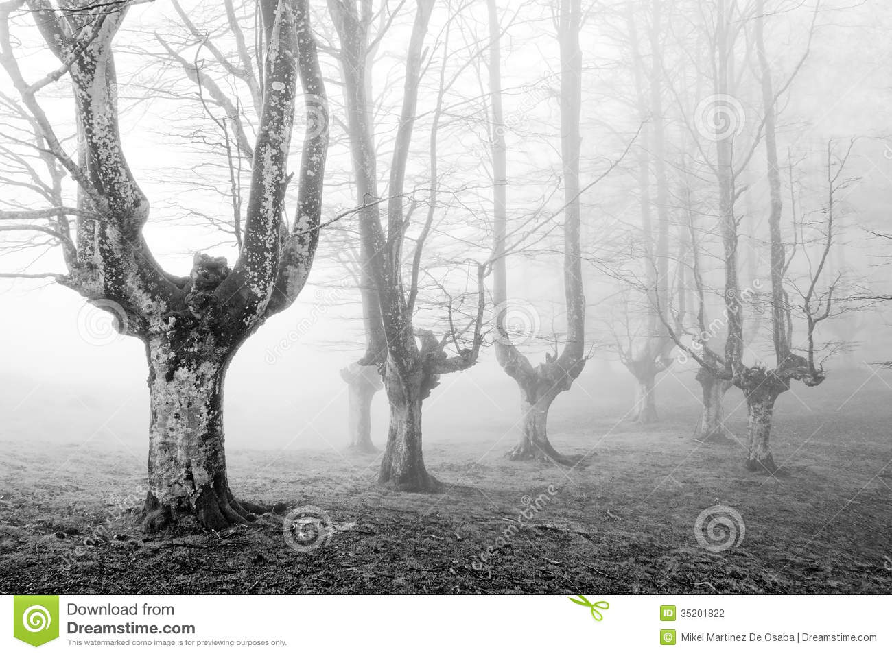 creepy forest with scary