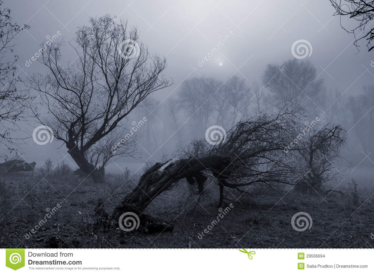 Black White And Dead Trees