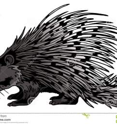 crested porcupine stock illustrations 5 crested porcupine stock illustrations vectors clipart dreamstime [ 1300 x 951 Pixel ]