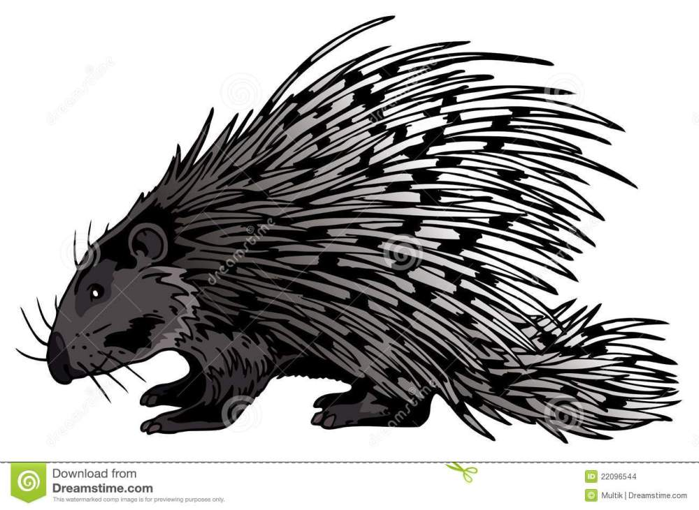 medium resolution of crested porcupine stock illustrations 5 crested porcupine stock illustrations vectors clipart dreamstime