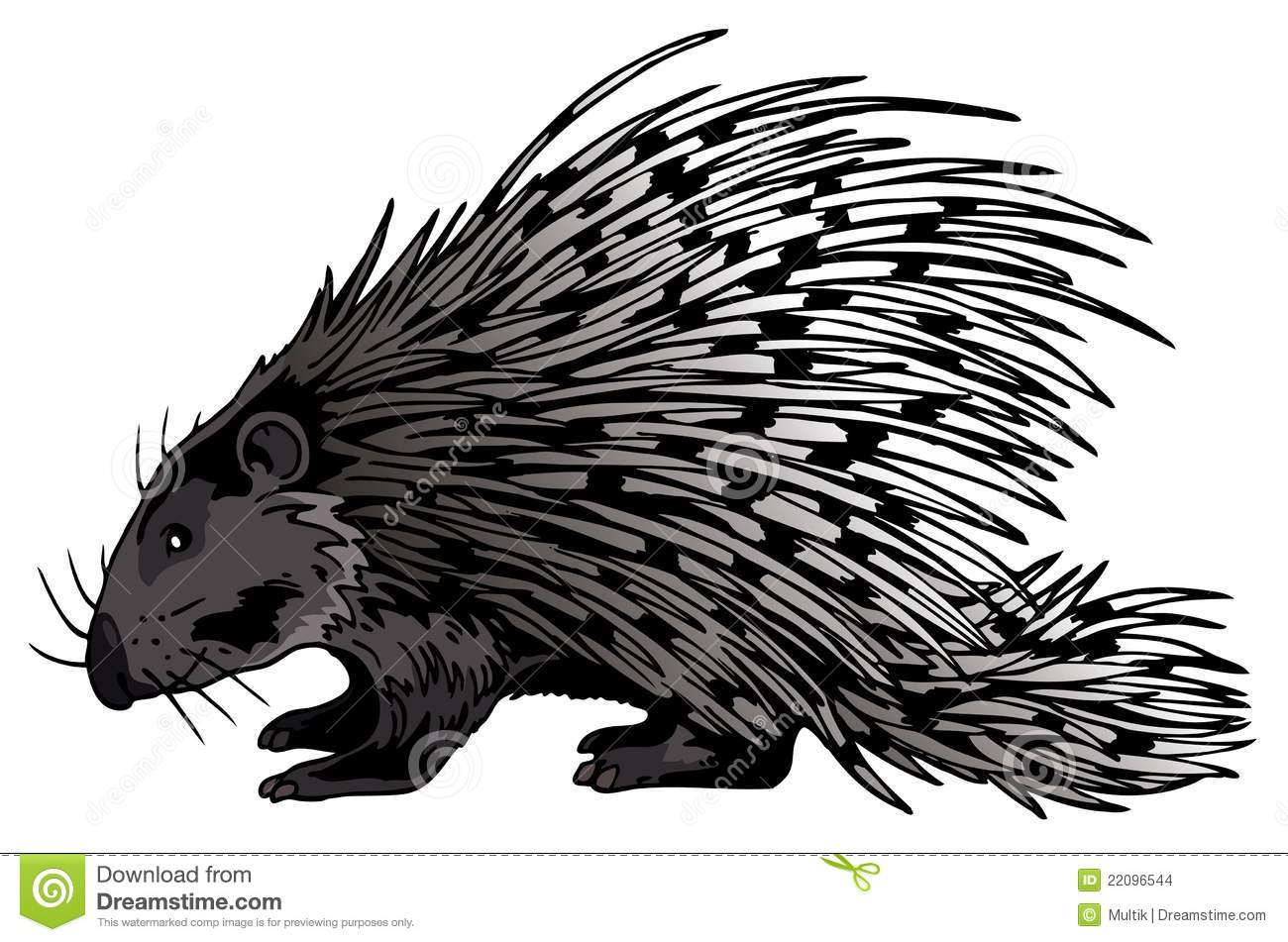 hight resolution of crested porcupine stock illustrations 5 crested porcupine stock illustrations vectors clipart dreamstime