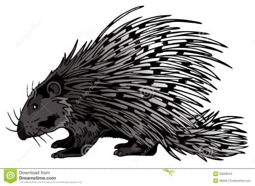 small resolution of crested porcupine stock illustrations 5 crested porcupine stock illustrations vectors clipart dreamstime