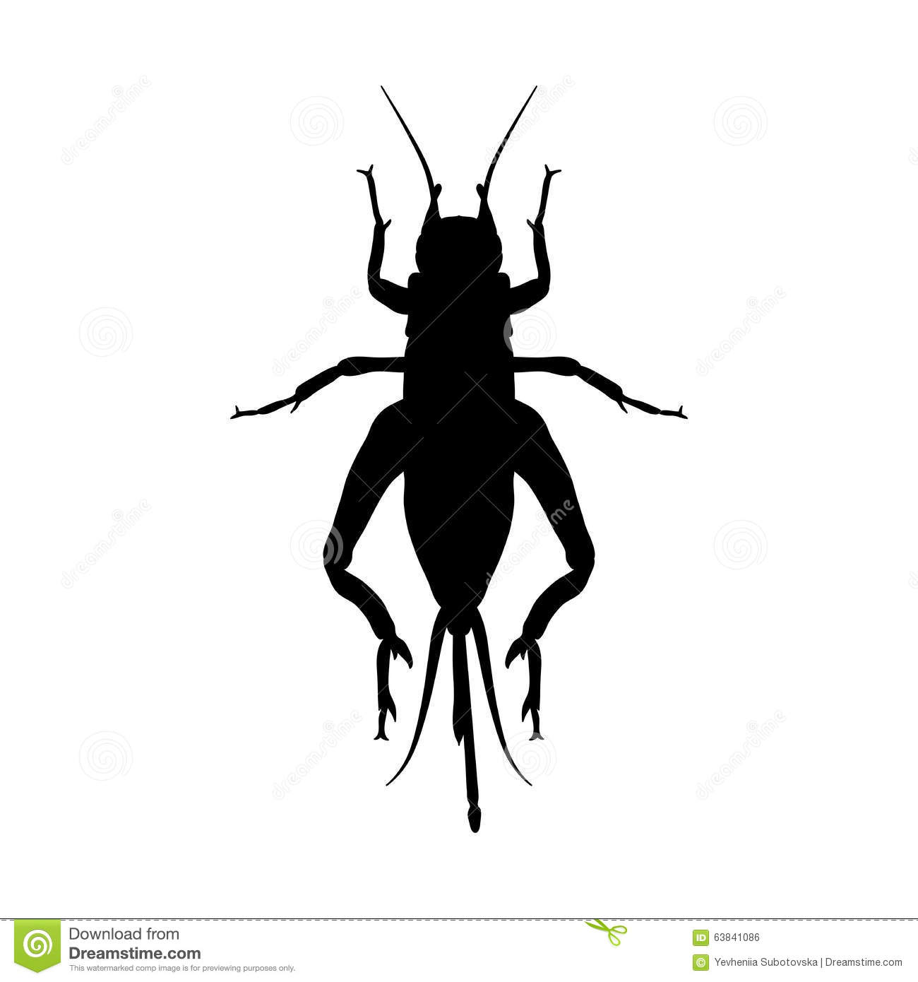Cricket Grig Gryllus Campestris Sketch Of Stock Vector
