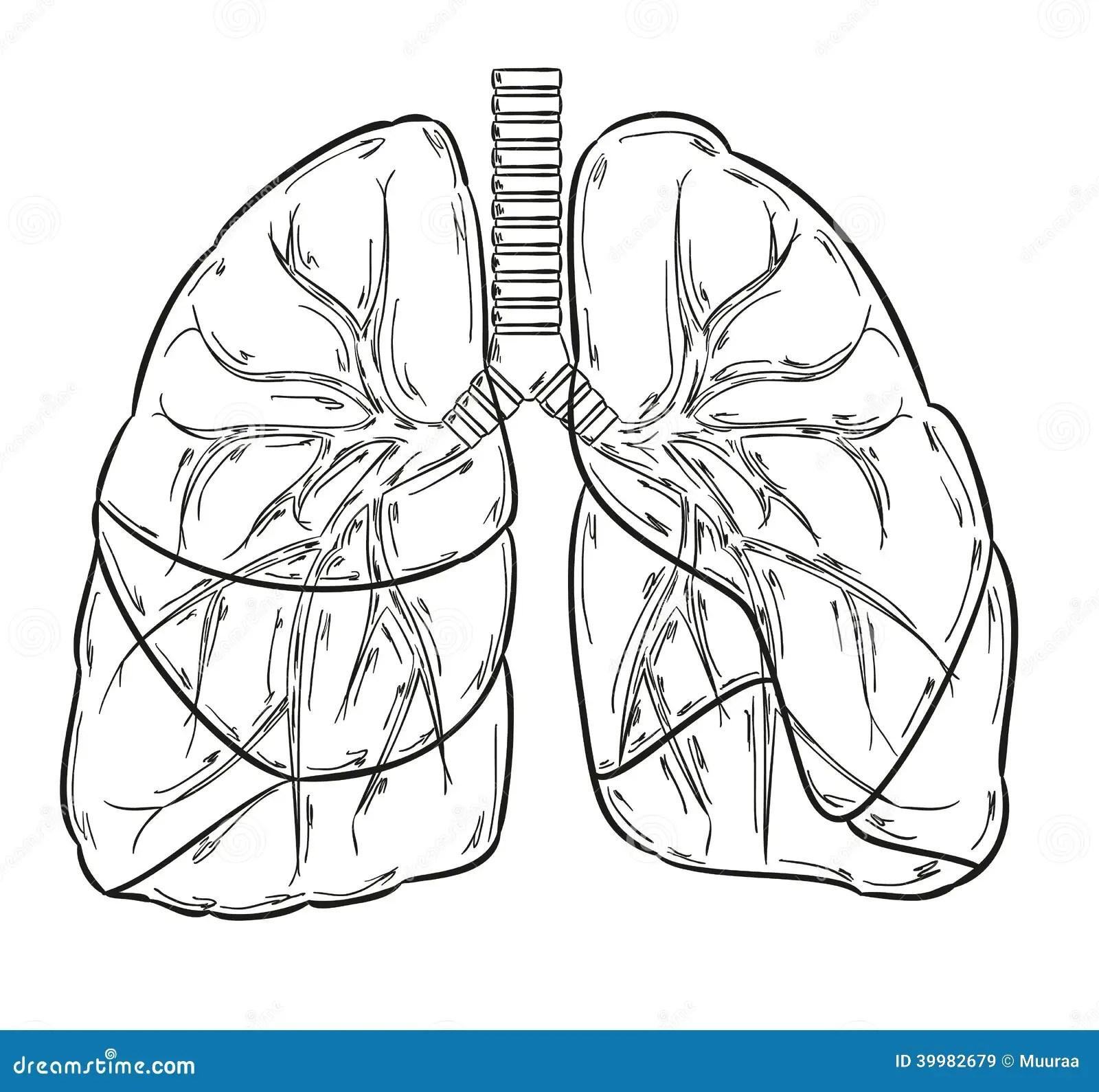 Croquis De Poumons Illustration De Vecteur Illustration