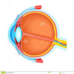 Unlabeled Heart Diagram Cross Section Ge Dryer Motor Wiring Of Human Eye Stock Illustration Optic