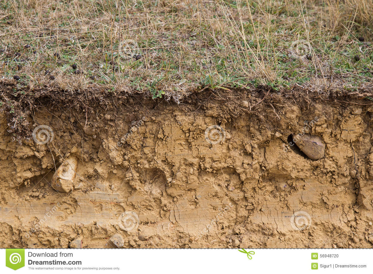 Cross Section Of Land Clay Stock Photo Image Of Ocher