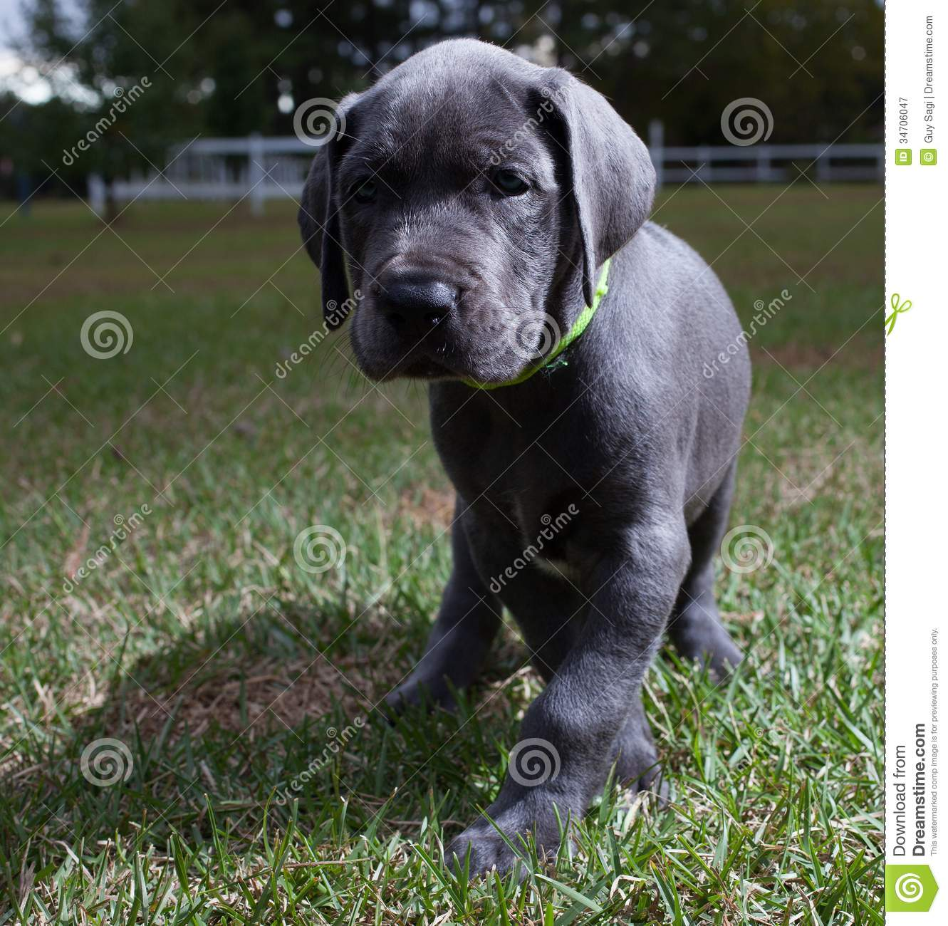 Curious Puppy Royalty Free Stock Photography  Image 34706047
