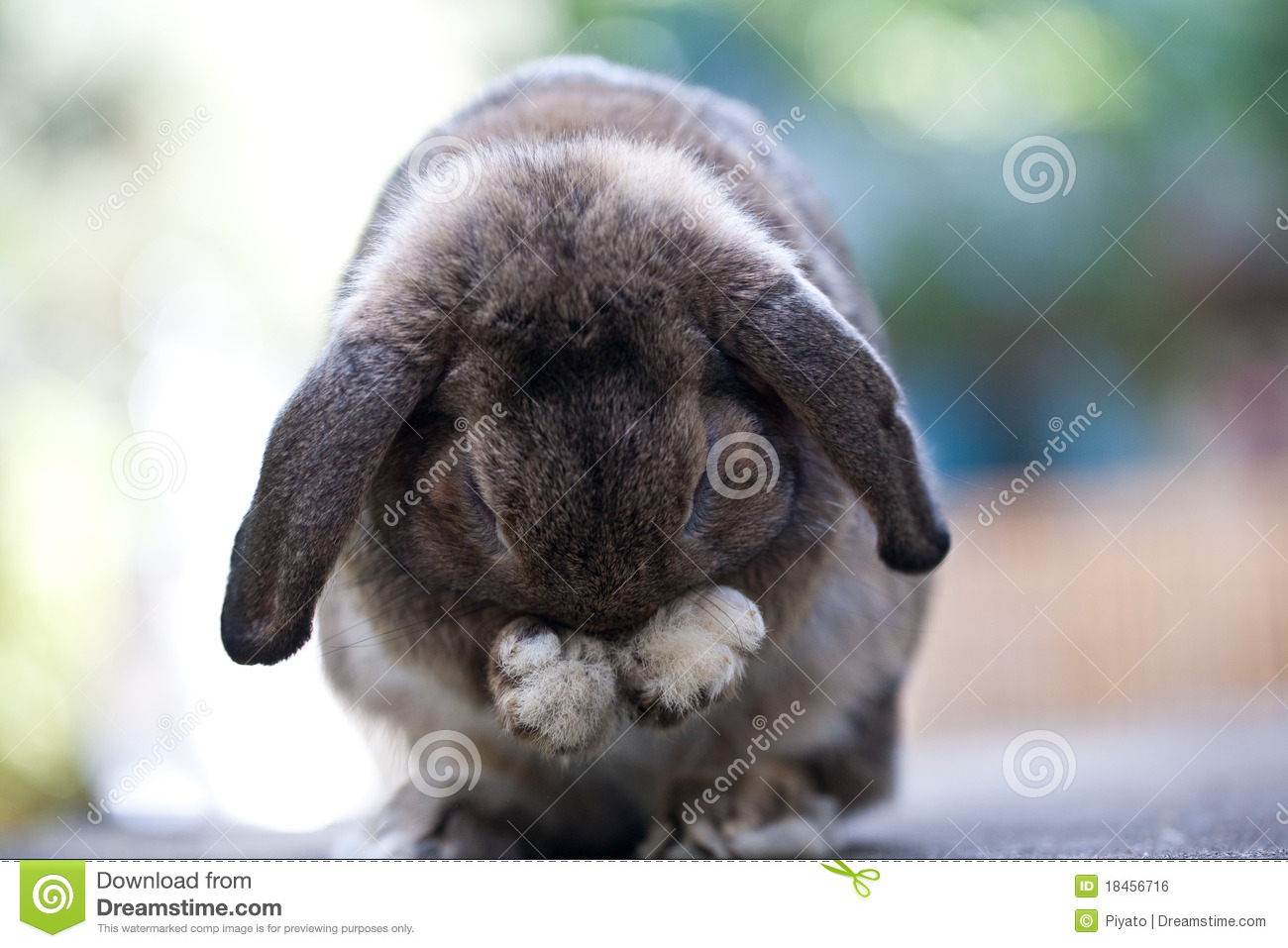 29 965 Cute Baby Bunny Photos Free Royalty Free Stock Photos From Dreamstime