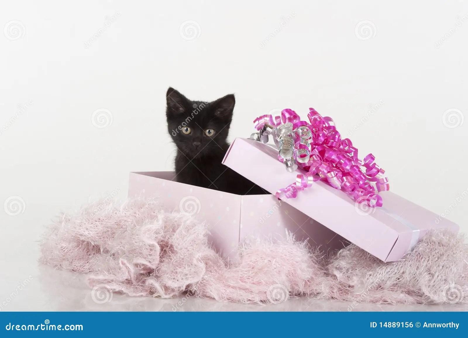 Background Happy Kitten Birthday