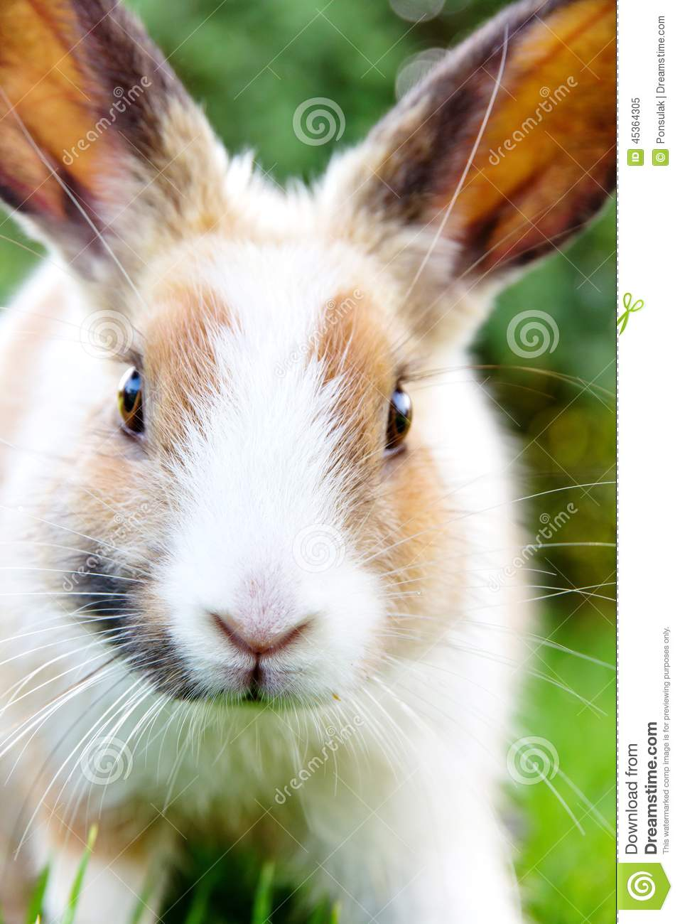 Cute Bunny Rabbit On The Grass Stock Photo Image 45364305
