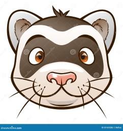 cute cartoon ferret face of cartoon ferret on the white background look similar pets [ 1300 x 1390 Pixel ]