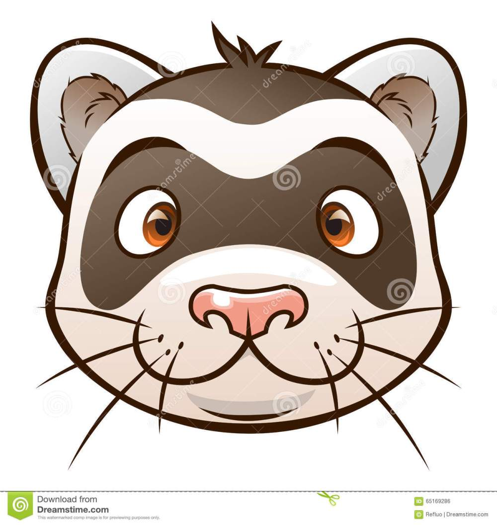 medium resolution of cute cartoon ferret face of cartoon ferret on the white background look similar pets