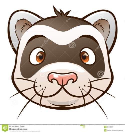 small resolution of cute cartoon ferret face of cartoon ferret on the white background look similar pets