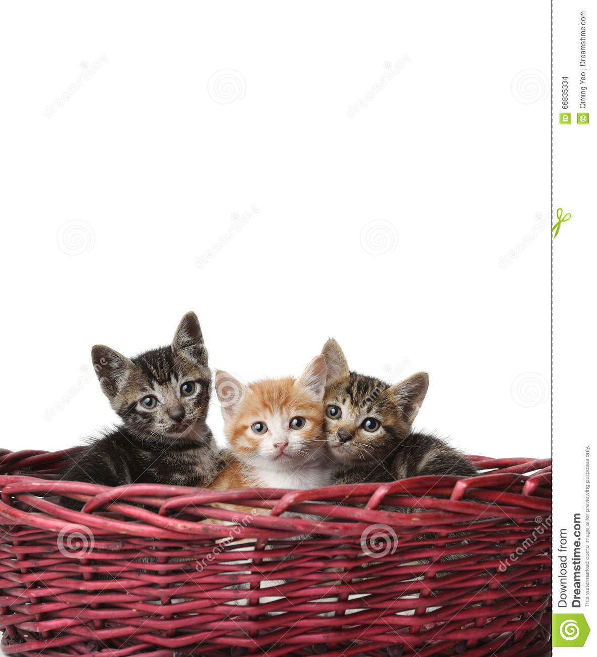 cute cats in the