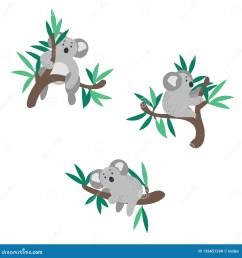 cute koala bear climbing on eucalyptus tree vector clipart  [ 1600 x 1690 Pixel ]