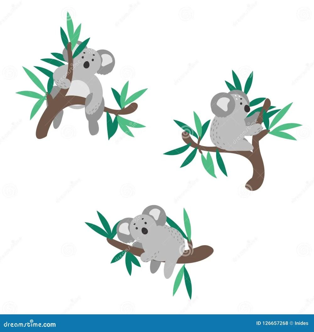 medium resolution of cute koala bear climbing on eucalyptus tree vector clipart