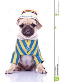 Cute Pug Puppy Dog Wearing Clothes Stock Photography ...
